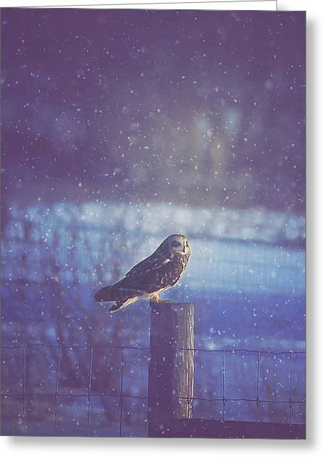 New York Evening Post Greeting Cards - Night Owl Greeting Card by Carrie Ann Grippo-Pike