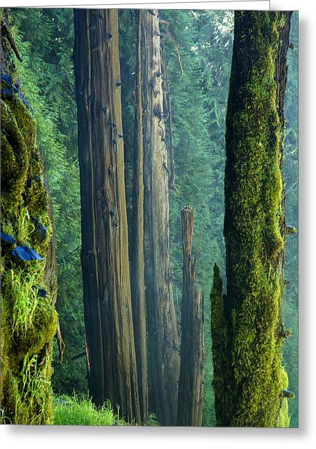 Smartphone Greeting Cards - Northwest Forest    Greeting Card by Mary Lee Dereske