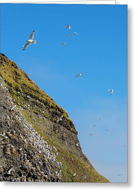 Norway Svalbard Barentsoya Greeting Card by Inger Hogstrom