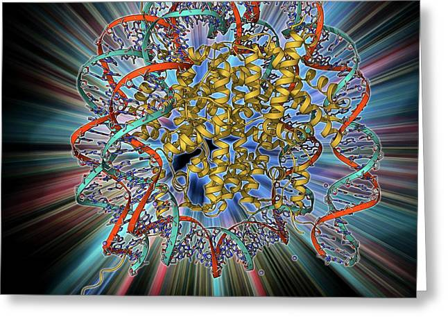 Nucleosome Molecule Greeting Card by Laguna Design