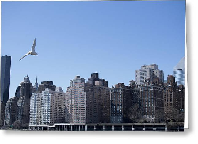 Flying Seagull Pyrography Greeting Cards - NYC Flight Greeting Card by Cristina Loaiza