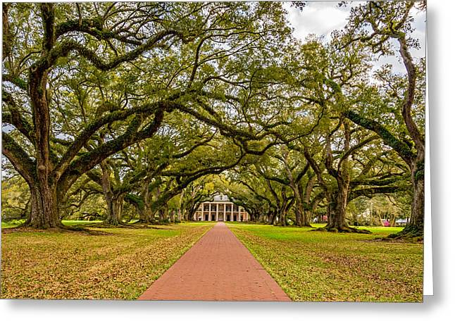 Slaves Greeting Cards - Oak Alley Plantation Greeting Card by Steve Harrington
