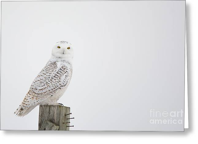 Recently Sold -  - Hunting Bird Greeting Cards - Observant Greeting Card by Cheryl Baxter