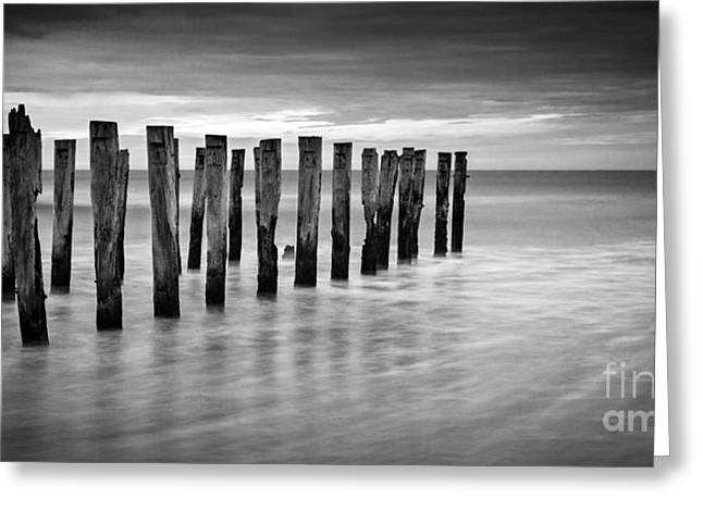 Piling Greeting Cards - Old Jetty Pilings Dunedin New Zealand Greeting Card by Colin and Linda McKie