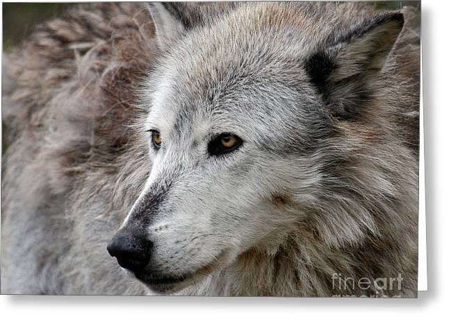 Preditor Greeting Cards - On Alert Greeting Card by Steve McKinzie