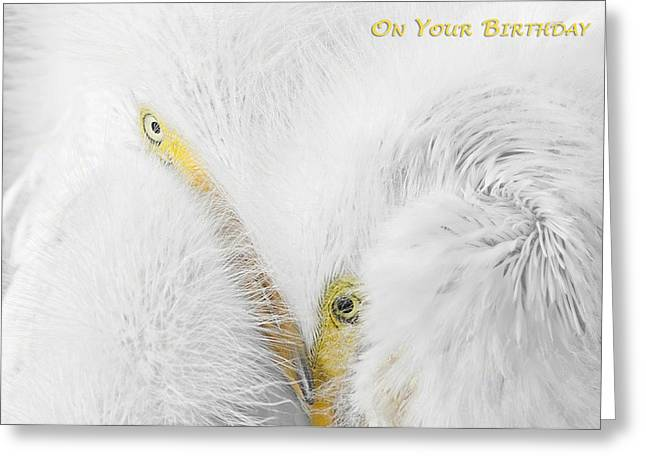 Macro Greeting Cards - On Your Birthday Greeting Card by Dawn Currie