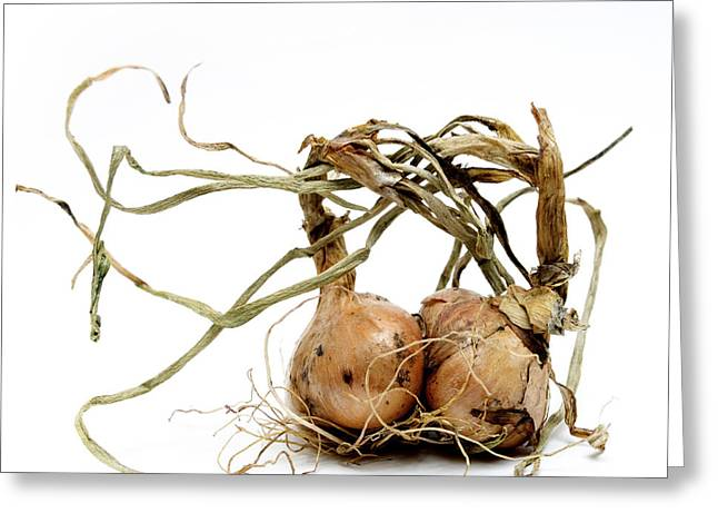 Intertwined Greeting Cards - Onions Greeting Card by Bernard Jaubert