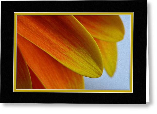 Matting Greeting Cards - Orange/Yellow Gerbera Close-Up Greeting Card by Charles Feagans