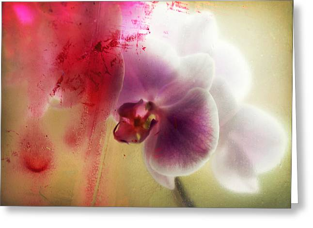 Greeting Cards - Orchid Greeting Card by Renata Vogl