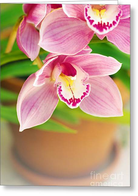 Pink Flower Branch Greeting Cards - Orchids Greeting Card by Carlos Caetano