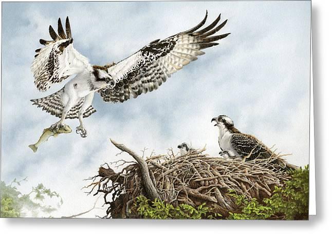 Osprey Drawings Greeting Cards - Osprey Lovers Key Florida Greeting Card by Richard Devine