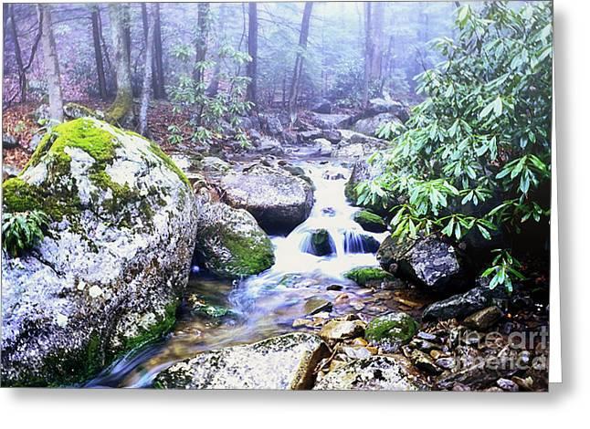 Stream Digital Greeting Cards - Otter Creek Wilderness Greeting Card by Thomas R Fletcher