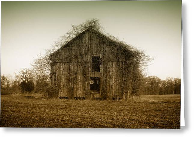 Not In Use Greeting Cards - Overgrown Brush on Barn Greeting Card by Mountain Dreams