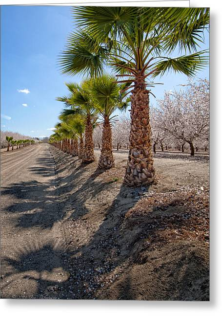 Ine Trees Greeting Cards - Palms Stand Guard Over Almond Orchard Greeting Card by Jim Thompson