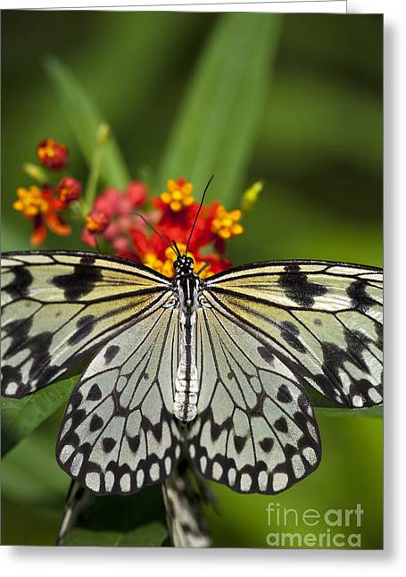 Paper Kite Butterfly Greeting Card by Brandon Alms