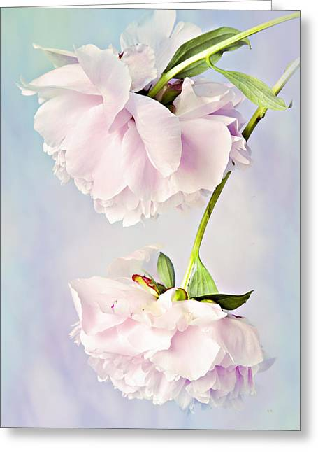 Pastel Peonies Greeting Card by Theresa Tahara