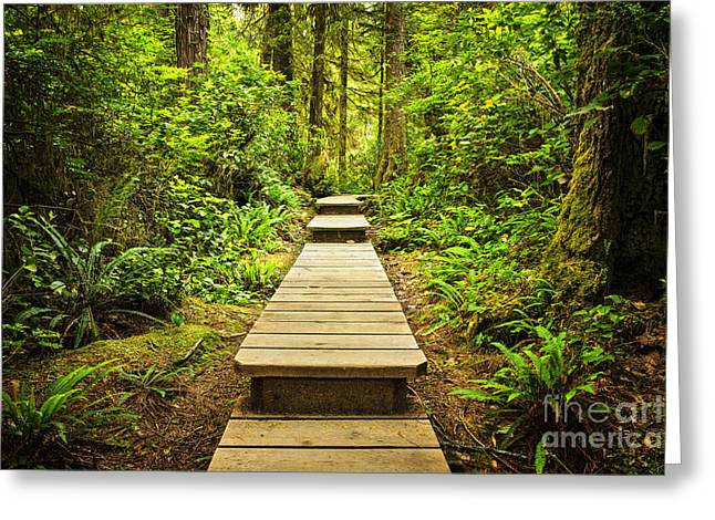 Recreation Greeting Cards - Path in temperate rainforest Greeting Card by Elena Elisseeva