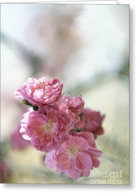 Prunus Persica Greeting Cards - Peach Prunus Persica Greeting Card by Maria Mosolova