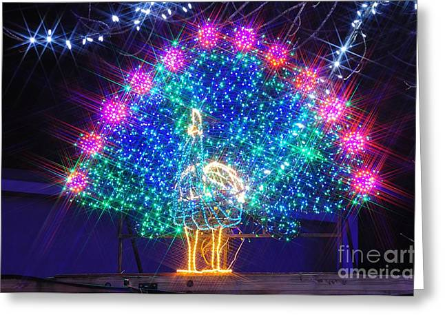 Christmas Lights Greeting Cards - Peacock Greeting Card by Mandy Judson
