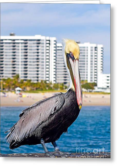 Seabirds Greeting Cards - Brown Pelican Greeting Card by Les Palenik