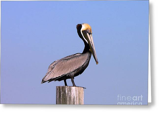 Al Powell Photography Usa Greeting Cards - Pelican Perch Greeting Card by Al Powell Photography USA