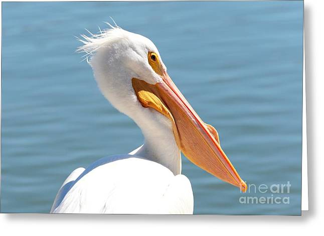 Orange Beak Greeting Cards - Pelican Profile Greeting Card by Carol Groenen