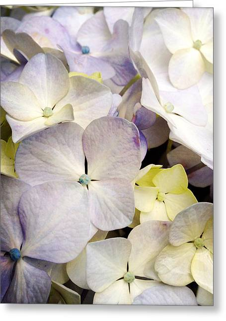 Nature Abstracts Greeting Cards - Petals Greeting Card by Les Cunliffe
