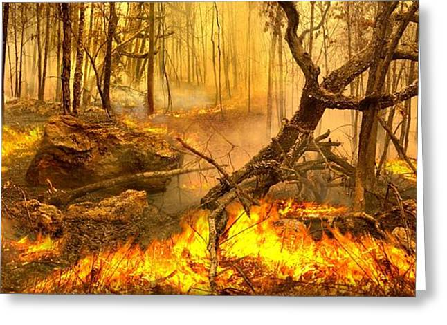 Forest Fire Greeting Cards - 2 Peter 3 10 Greeting Card by Bill Stephens