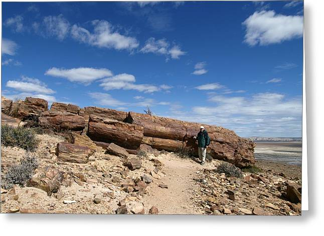 Biological Greeting Cards - Petrified forest, Argentina Greeting Card by Science Photo Library