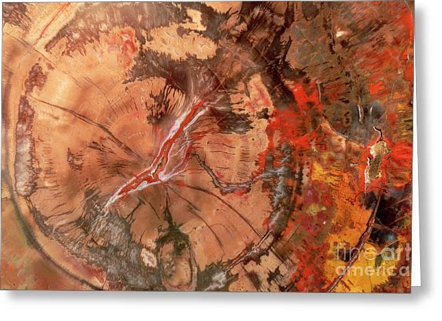Petrified Wood Detail Greeting Card by Yva Momatiuk John Eastcott