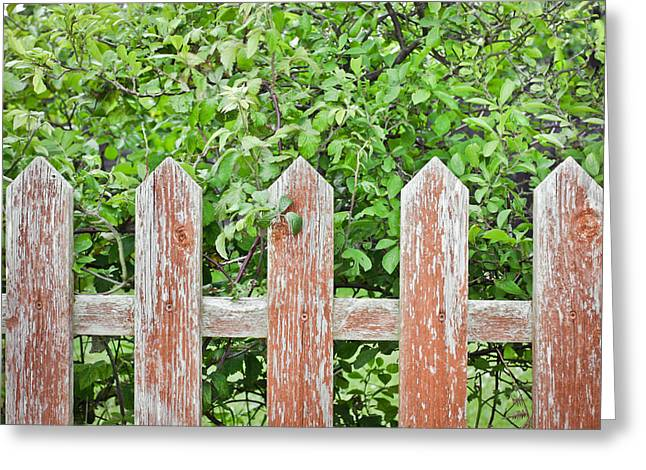 Border Photographs Greeting Cards - Picket fence Greeting Card by Tom Gowanlock