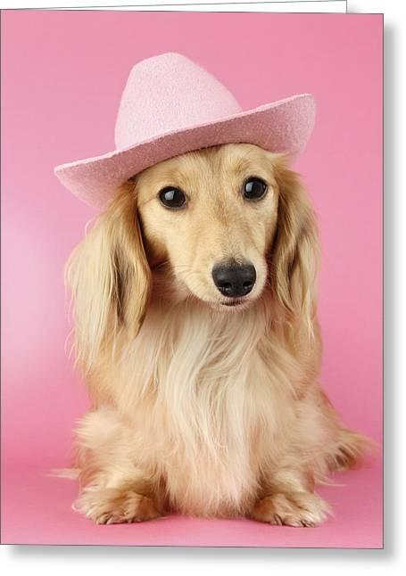 Dog Hair Greeting Cards - Pink Times Greeting Card by Greg Cuddiford