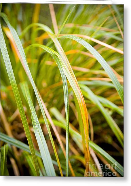 Plant Details Greeting Card by Tim Hester