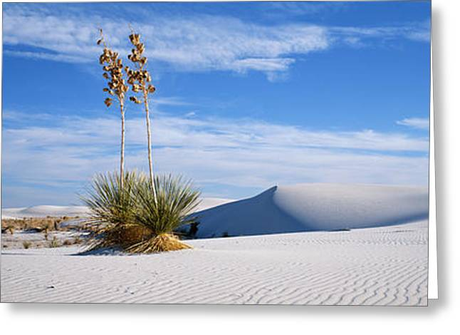 Sand Patterns Greeting Cards - Plants In A Desert, White Sands Greeting Card by Panoramic Images