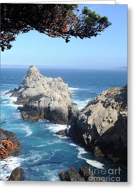 Point Lobos Photographs Greeting Cards - Point Lobos Number Four Greeting Card by Catherine Lau