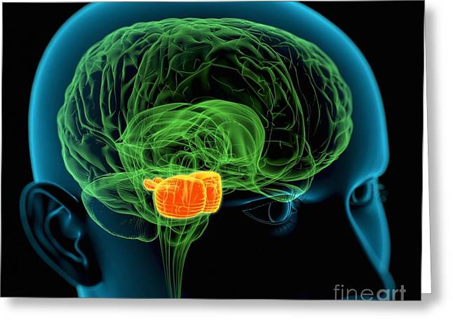 Brain Controlled Greeting Cards - Pons In The Brain, Artwork Greeting Card by Roger Harris
