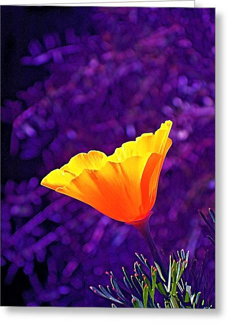 Pamela Cooper Greeting Cards - Poppy 2 Greeting Card by Pamela Cooper