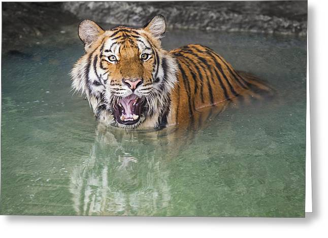 Wildcats Greeting Cards - Portrait of a Royal Bengal tiger  Greeting Card by Anek Suwannaphoom