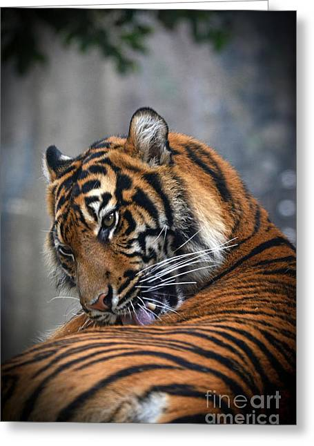 Photos Of Cats Mixed Media Greeting Cards - Portrait of a Tiger Greeting Card by Jim Fitzpatrick