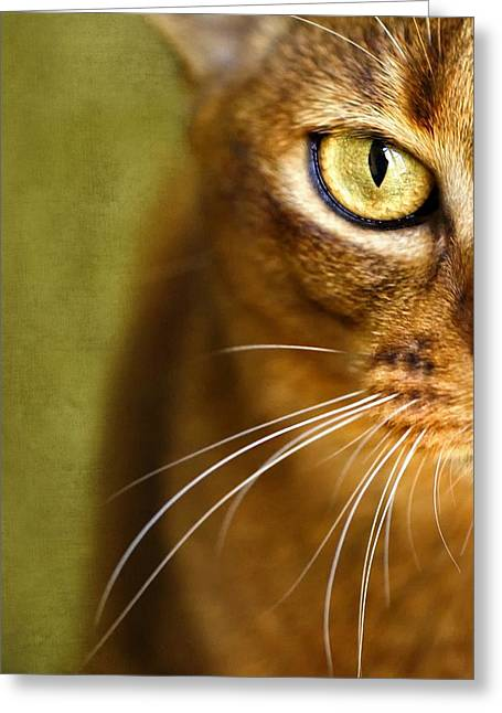 Cat Face Greeting Cards - Portrait of an Abyssinian cat with textures Greeting Card by Wolf Shadow  Photography