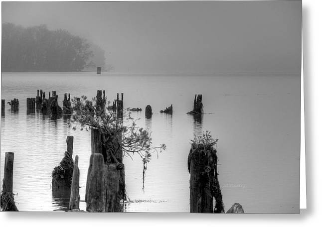 Pier Pilings Greeting Cards - Potomac Fog Greeting Card by JC Findley