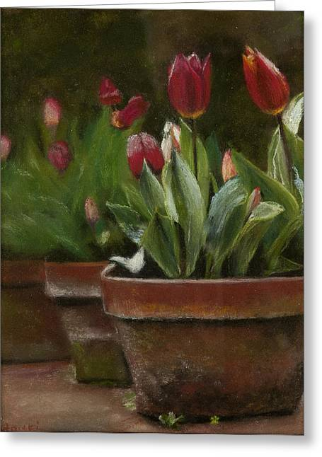 Cindy Plutnicki Greeting Cards - Potted Tulips Greeting Card by Cindy Plutnicki