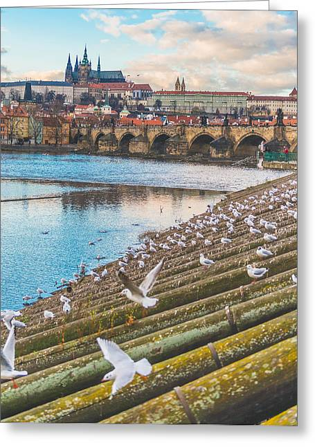 Castle. Birds Greeting Cards - Prague Greeting Card by Cory Dewald