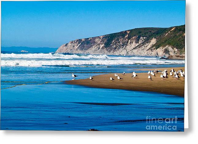 Beach Landscape Greeting Cards - Pt Reyes National Seashore Greeting Card by Bill Gallagher