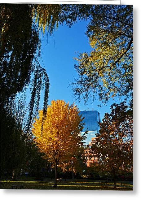 Oxford. Oxford Ma. Massachusetts Greeting Cards - Public Garden Fall Tree Greeting Card by Toby McGuire