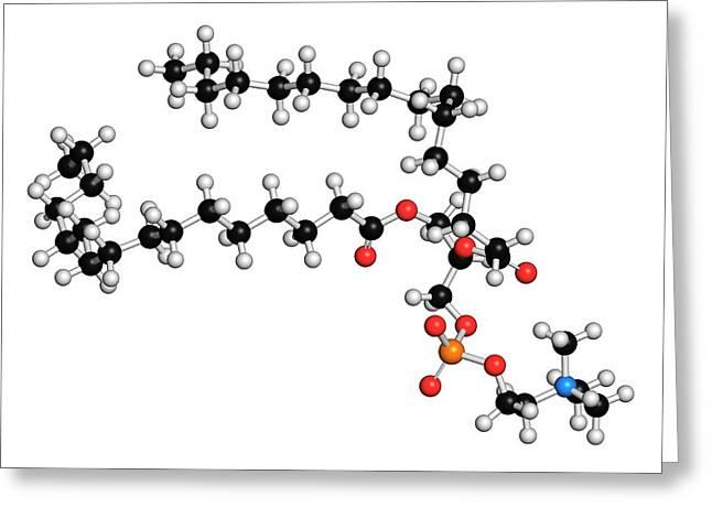 Pulmonary Surfactant Molecule Greeting Card by Molekuul