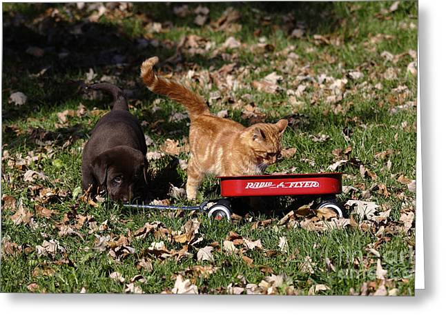 Radio Flyer Wagon Greeting Cards - Puppy And Kitten Greeting Card by Linda Freshwaters Arndt