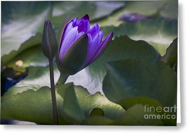 Nils Greeting Cards - Pupukea Garden Breeze Greeting Card by Sharon Mau