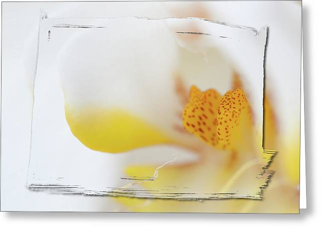 Florist Greeting Cards - Pure White Greeting Card by Sebastian Musial