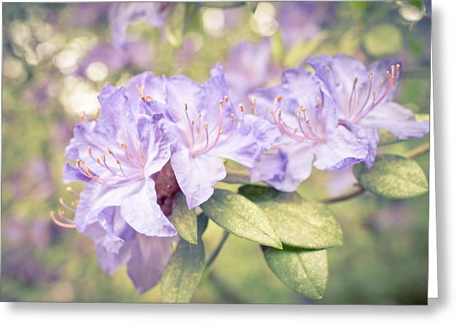 Rhodendron Greeting Cards - Purple Rhododendron Sparkles Greeting Card by Priya Ghose
